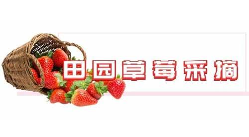 重庆天池百花谷田园草莓采摘