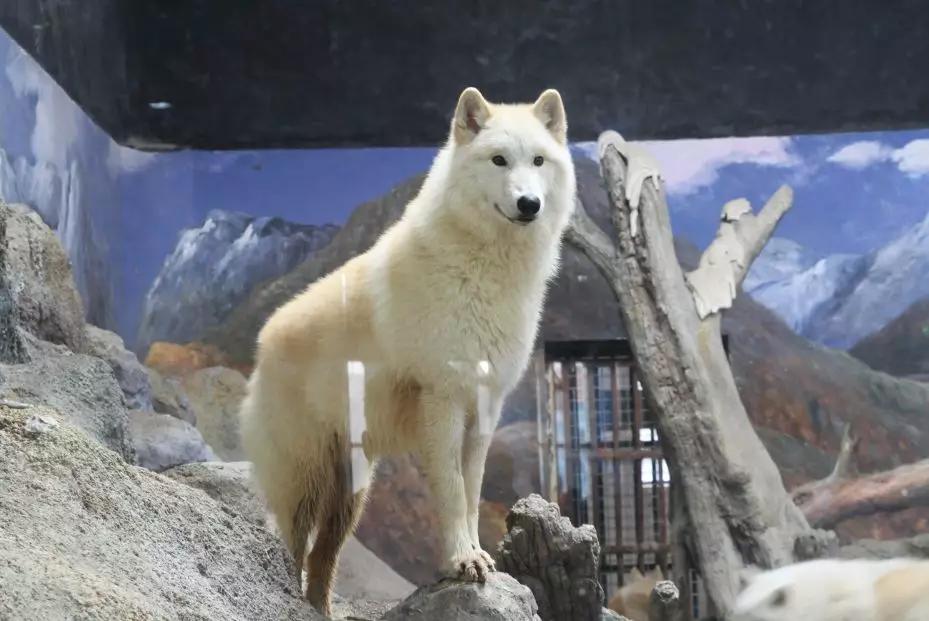 曲江海洋极地公园怎么样,都有什么,曲江海洋馆极地馆攻略