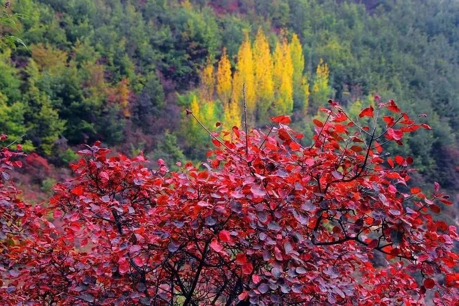 林州大峡谷好玩吗?太行大峡谷红叶节怎么样?