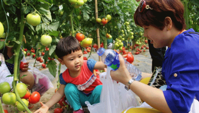2020杭州水果护照价格、2020水果护照多少钱