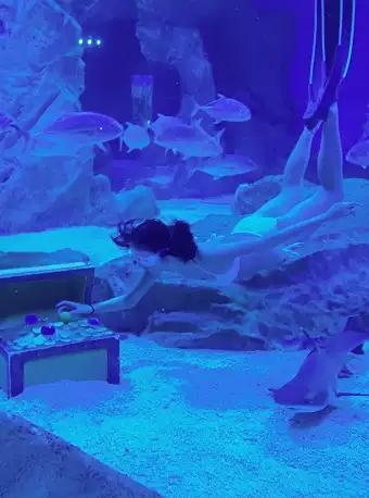 成都潜水体验自由潜