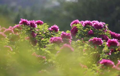 洛阳中国国花园