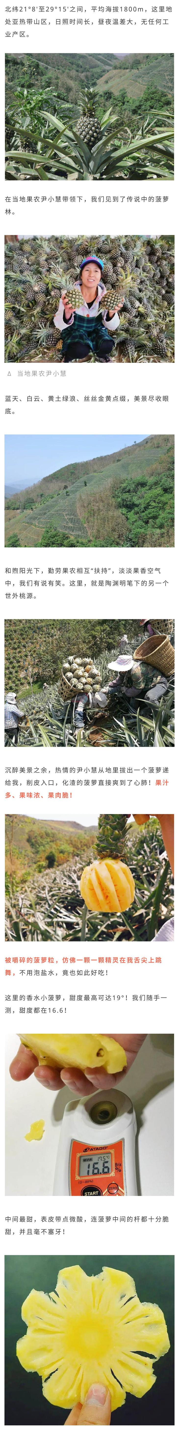 云南香水小菠萝