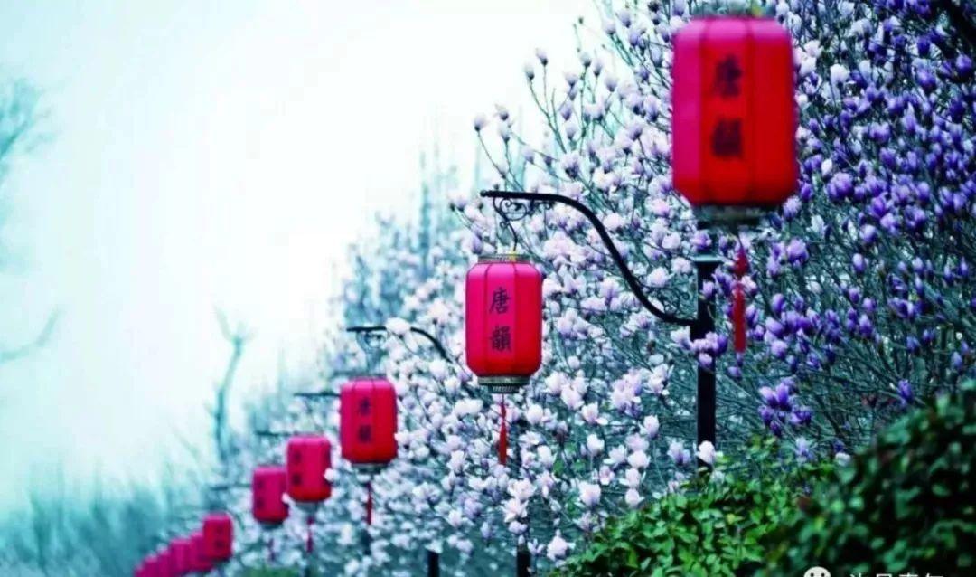 许昌鄢陵唐韵樱花园什么时候开?多少钱?