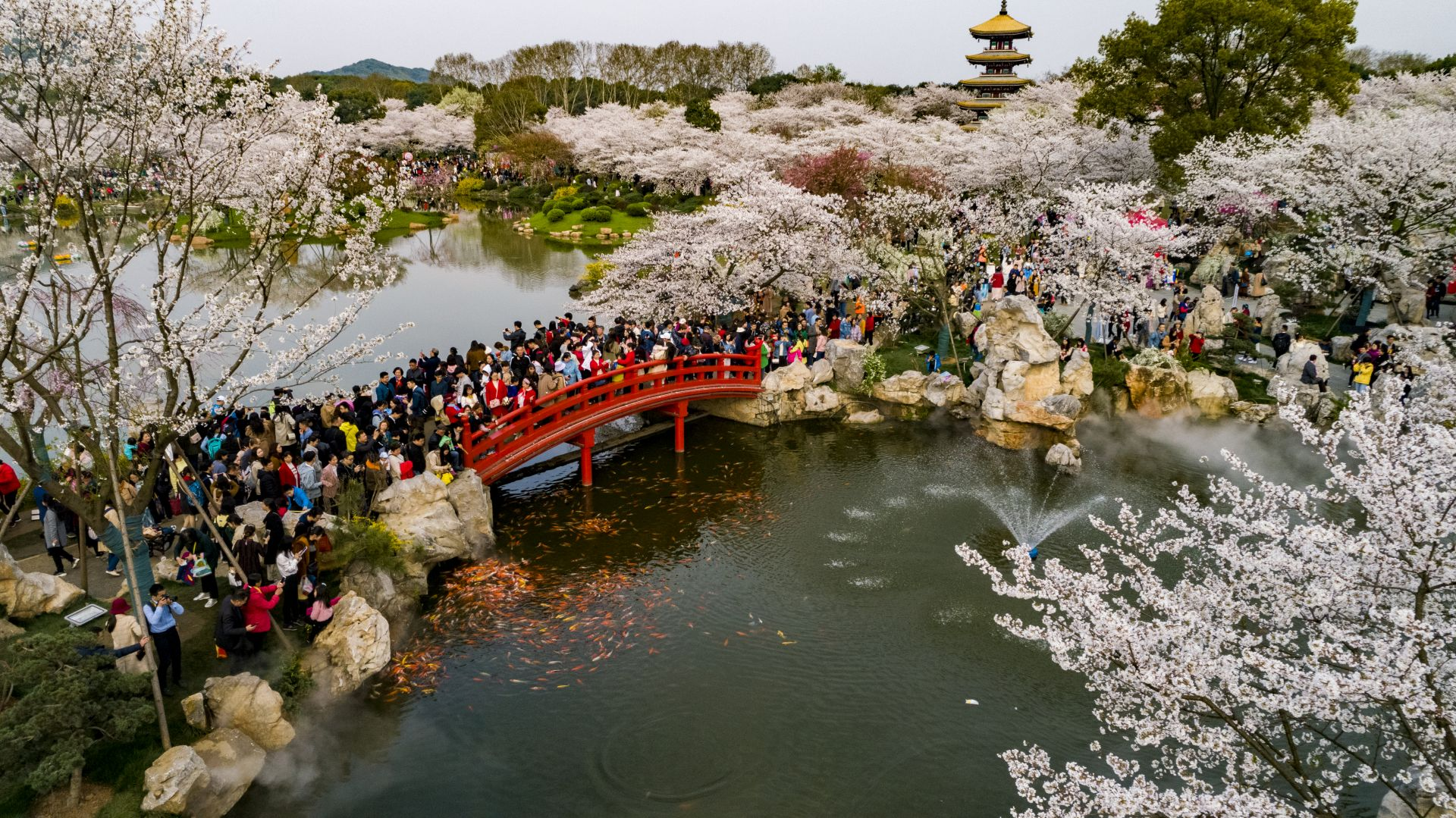 2019武汉东湖樱花园怎么去?在哪里?