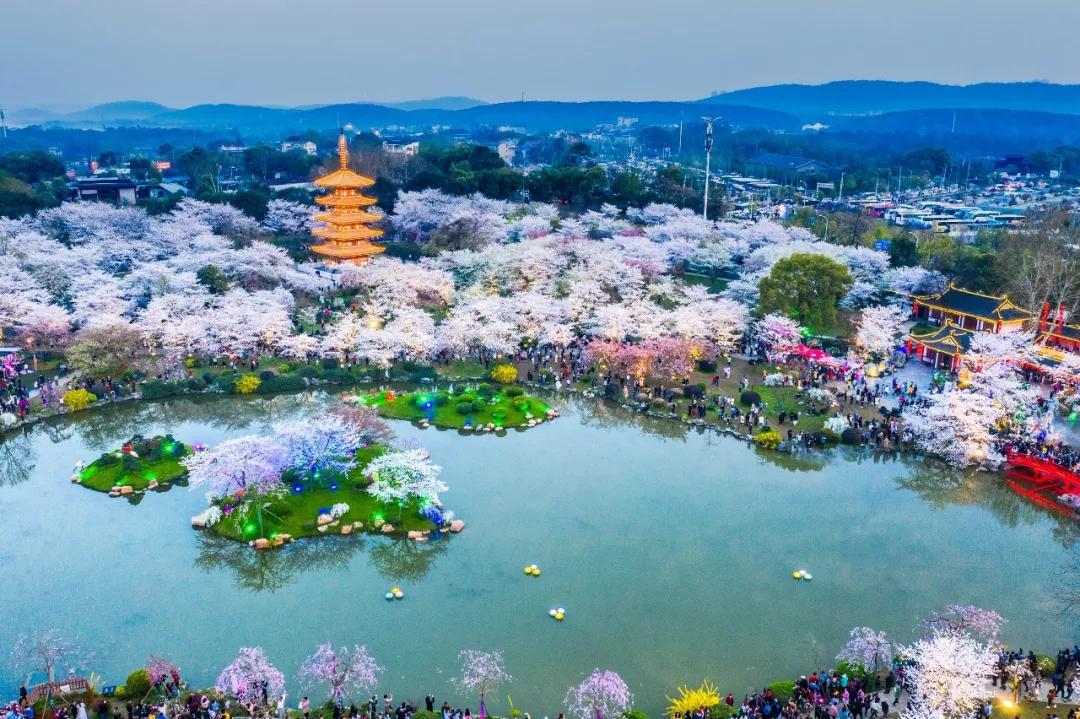 武汉东湖樱花园要门票吗?2019武汉东湖樱花园要门票价格