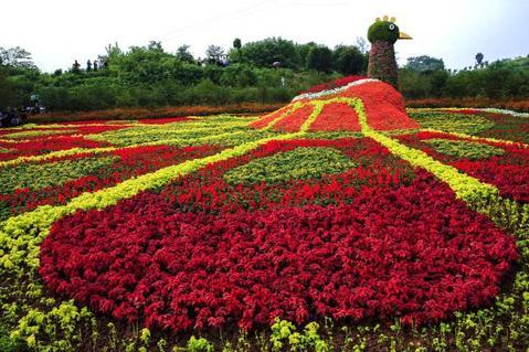 重庆凤凰花海