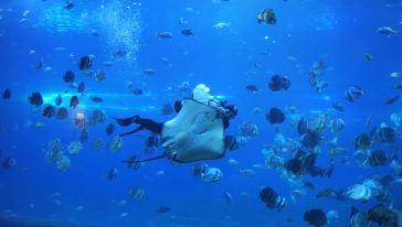 汉海海洋世界