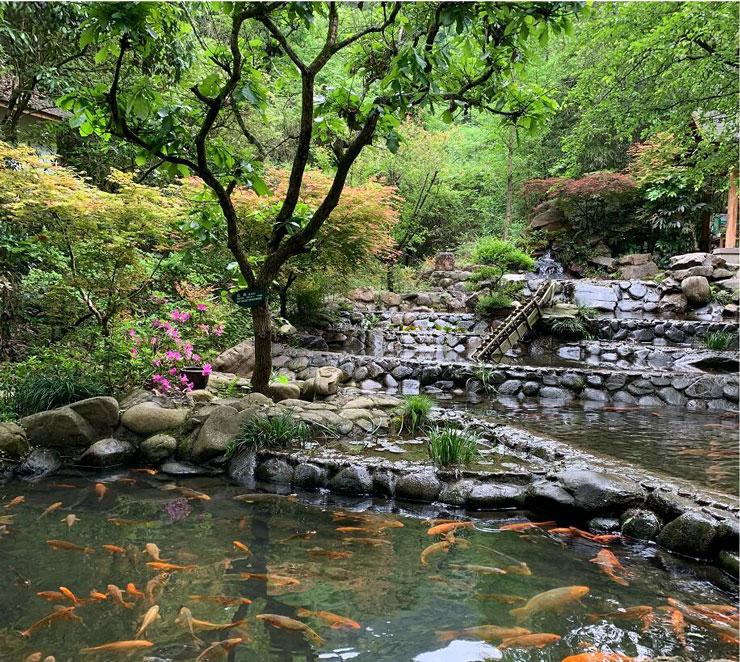 杭州千岛湖森林氧吧
