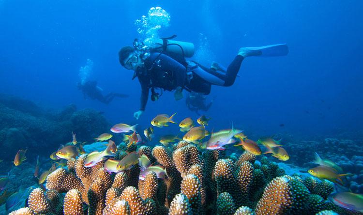三亚大东海潜水基地