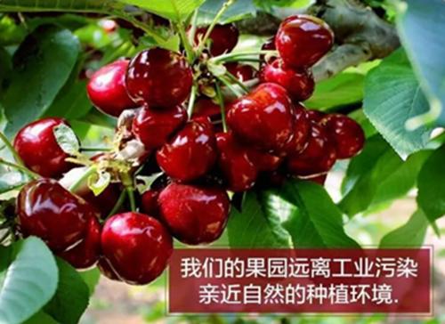 郑州须水樱桃庄园