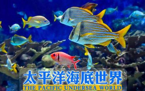 2019北京太平洋海底世界好玩吗?2019北京太平洋海底世界怎么样?