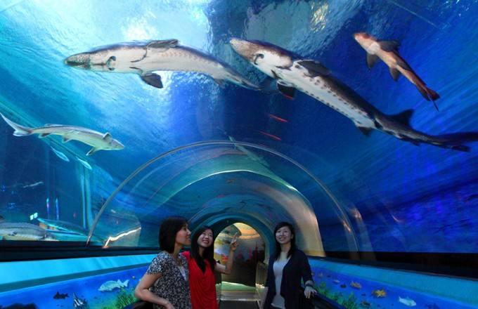 2019香港海洋公园门票多少钱?2019香港海洋公园门票价格