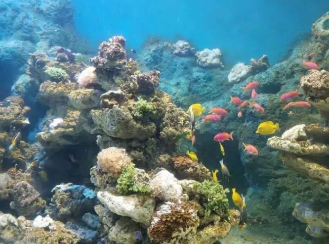 长沙海立方海洋公园门票多少钱?长沙海立方海洋公园门票价格