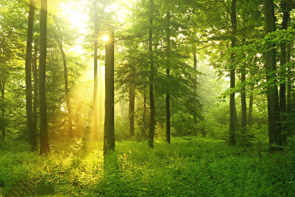 六里坪国家森林公园要门票吗?六里坪国家森林公园门票价格/景区介绍