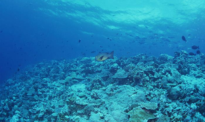 南通海底世界好玩吗?南通海底世界攻略、地址、门票