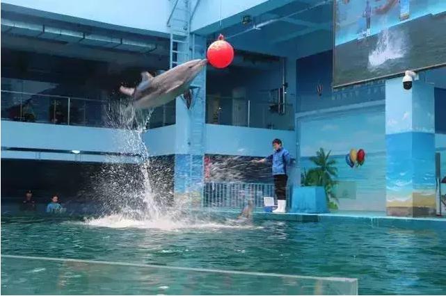 郑州海洋馆周末一日游