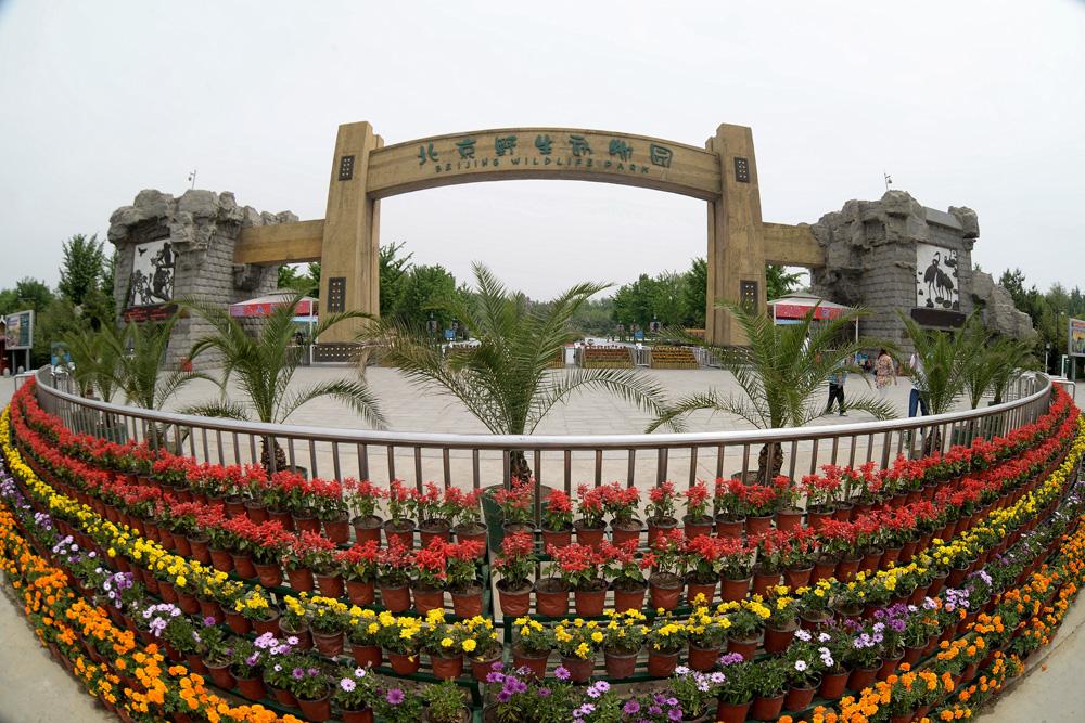 北京野生动物园游玩攻略(怎么样+好玩吗)
