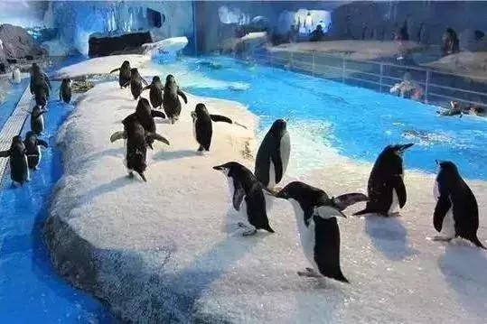 成都海昌极地海洋公园攻略、怎么样?好玩吗?