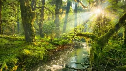 西安音乐剧一个人的森林