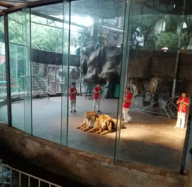 2019碧峰峡野生动物园