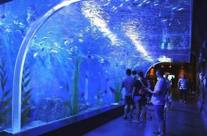 锦艺城海洋馆海豚表演时间,游玩项目,亮点