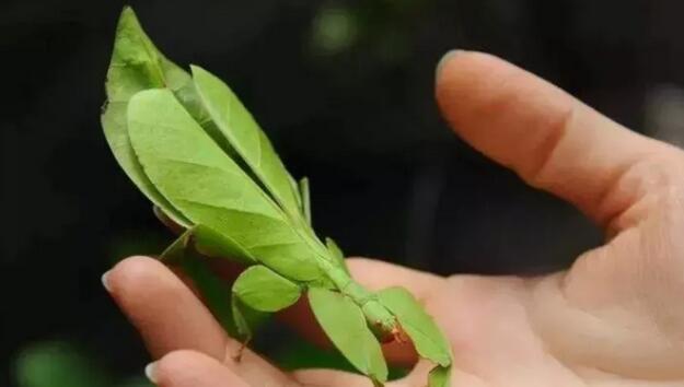 2019佛山生态昆虫主题展