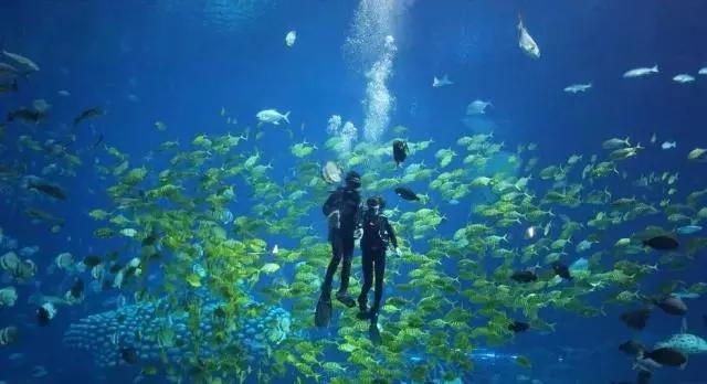 徐州海底世界有何看点?(附节目演出时间表)
