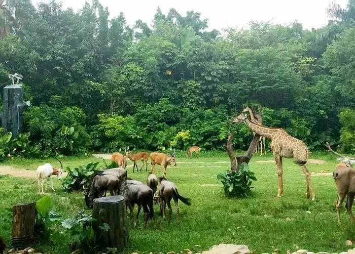 确定了!郑州野生动物园即将开建,选址在这里