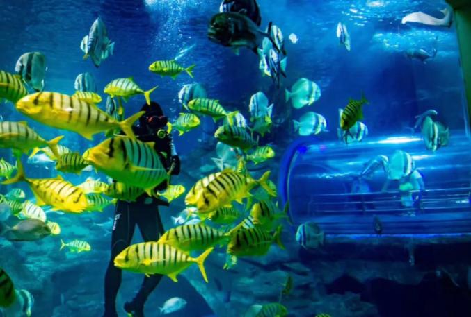 2020北京太平洋海底世界门票多少钱,北京太平洋海底世界特价票