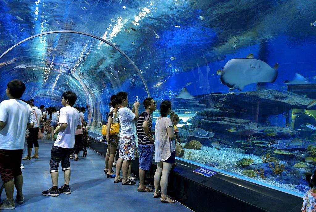 郑州海洋馆怎么样,郑州海洋馆好玩吗,郑州海洋馆评价