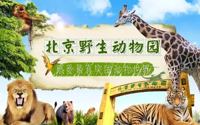 北京野生动物园旅游攻略、游玩路线及交通指南