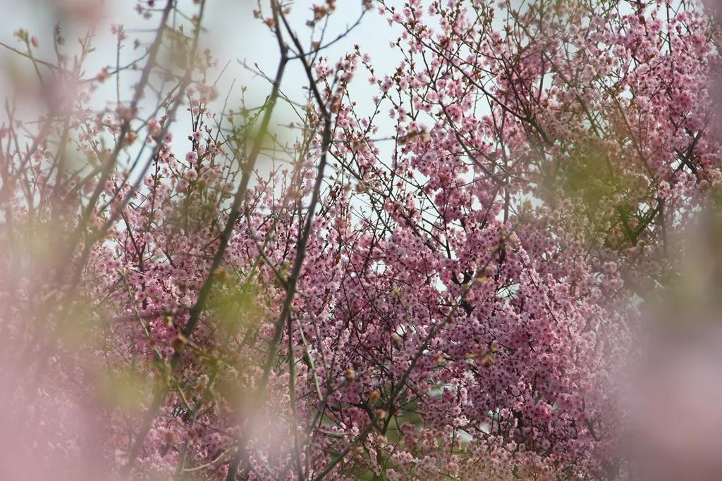 踏春赏花春满龙亭,是有颜色的,是有声音的,是有味道的
