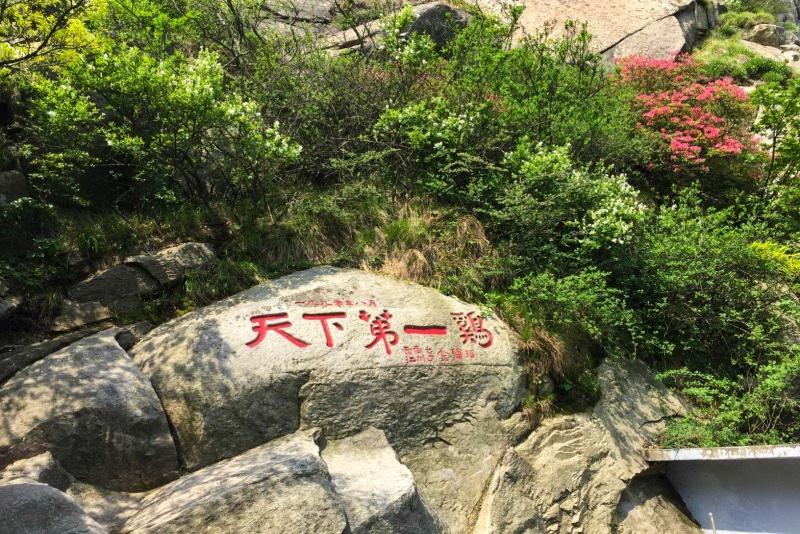 阳春三月,鸡公山景区美的仿若仙境,待到疫情结束,一定要去