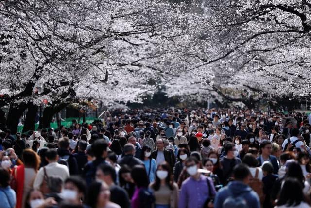 挤爆了!日本人赏樱花、逛街、围观奥运圣火,政府警告不管用