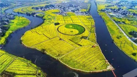 潼南崇龛油菜花