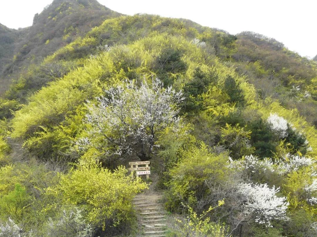 万亩金花海,春沐养生泉,豫西旅游度假区三大景区3月24日同步开园!