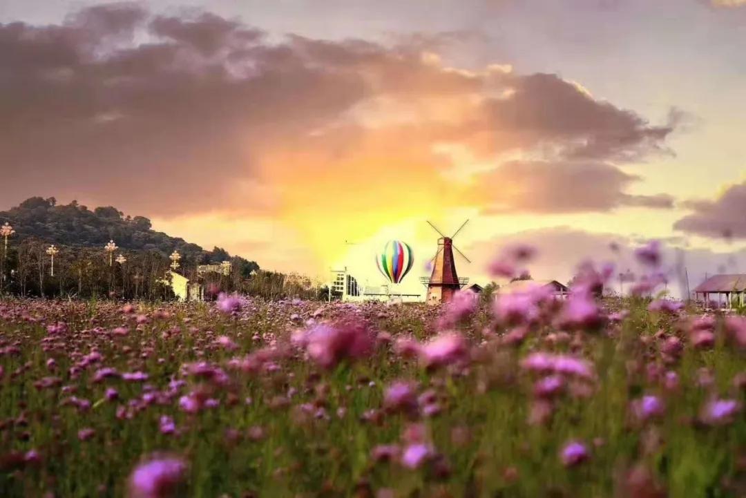 太湖花海主题度假乐园