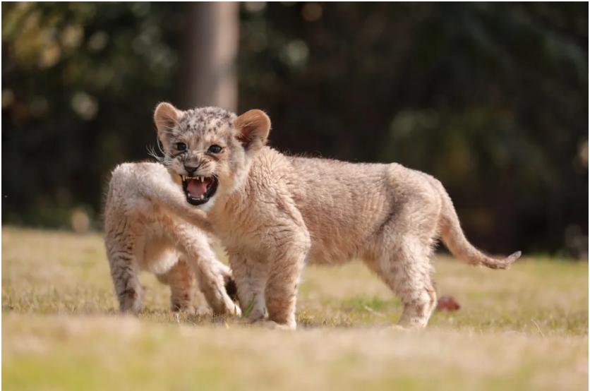 上海野生动物园2020年3月16日恢复开放 最强攻略来了