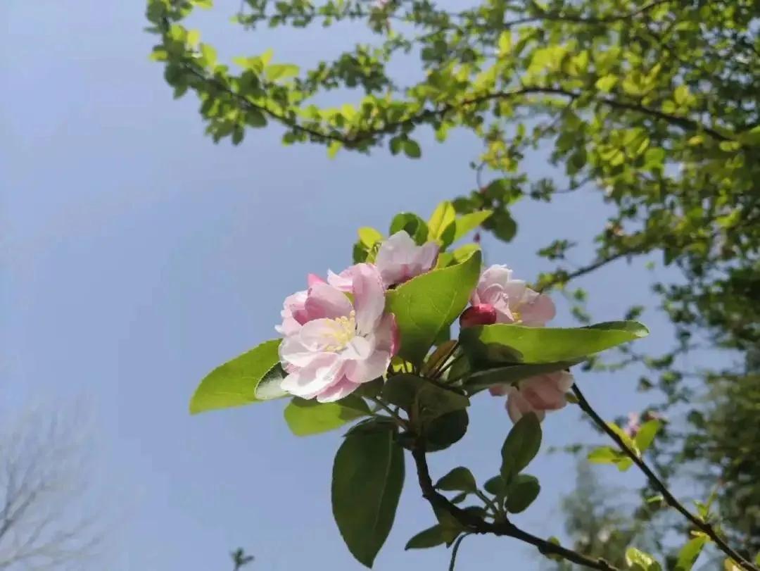 春游巩义长寿山景区,不负春风好时节