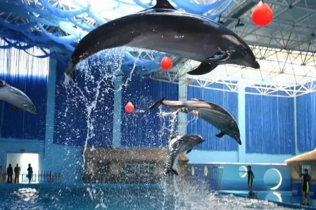 春暖花开,南京海底世界在闭馆57天后终于开园了!