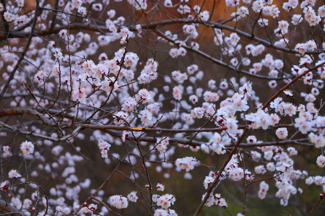 红旗渠:春风拂柳绿 花动一山春