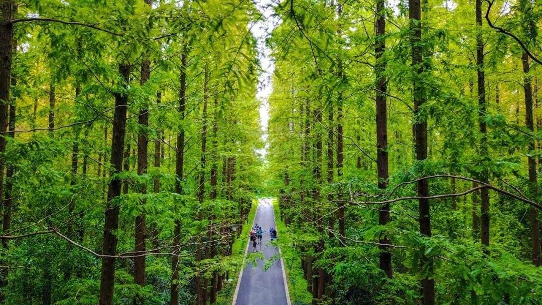 东平国家森林公园门票价格/开放时间/地址详情