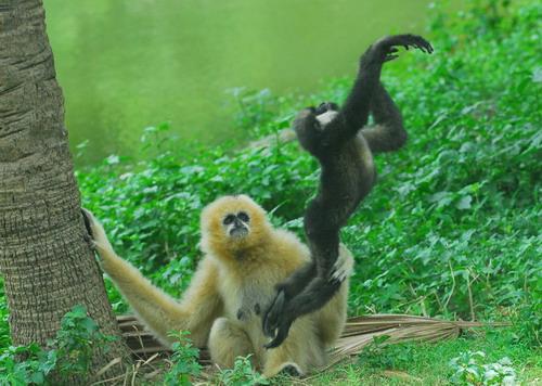 深圳野生动物园最佳游览路线及交通指引