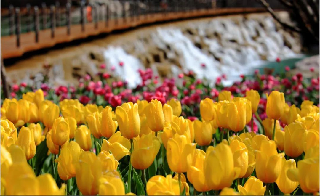 """宝泉景区:以花之名在最美的季节""""郁""""见你"""