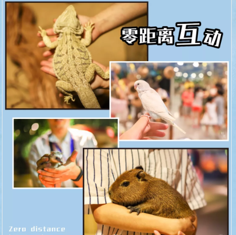 杭州嗒咪奇幻动物园地址在哪里?(附交通攻略)