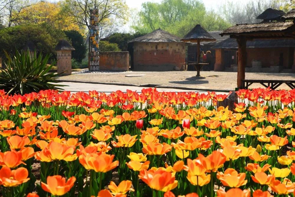最美人间四月天,正是踏青出游好时节|北京世界公园满园春色