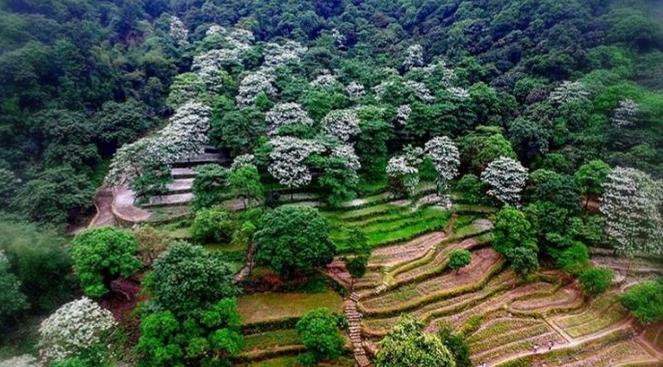 广州二龙山花园