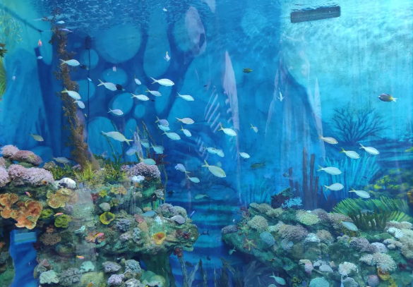 上海海昌海洋公园好不好玩?有何特色?