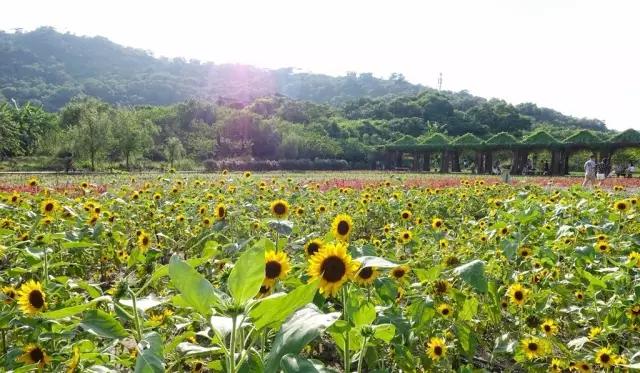 汕头丹樱生态园景区介绍